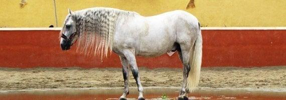 seguro todo riesgo para caballos