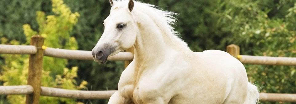 seguros para caballos.