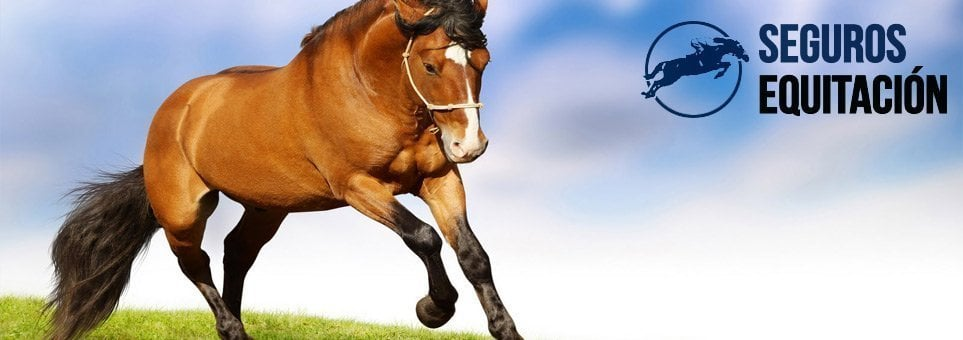 responsabilidad civil para caballos