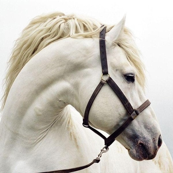 seguros-equitacion7