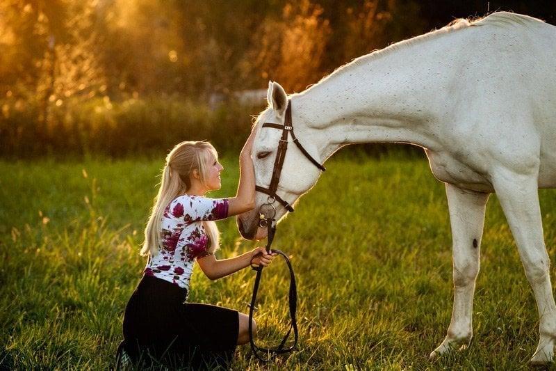 seguro para caballos