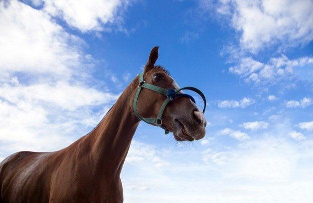 Retirada de cadaveres equinos, seguros para caballos
