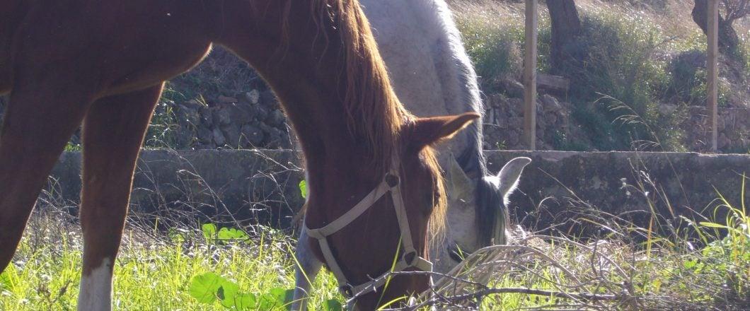 Calor y caballos