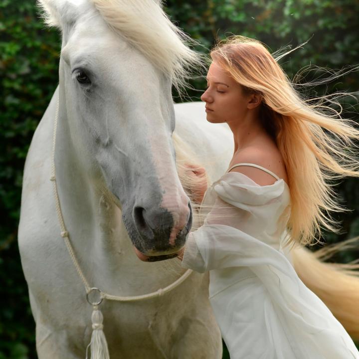 assurance complète pour les chevaux