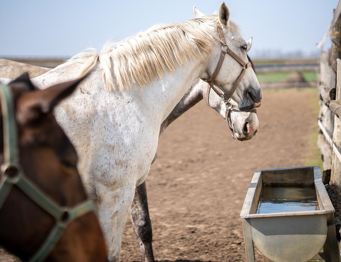 Cuidados del caballo durante el Verano